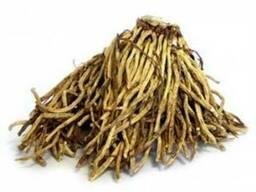 Продаем корень чемерицы - фото 1