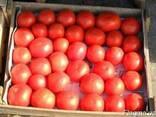 Продаем помидоры оптом, мелким оптом - фото 1