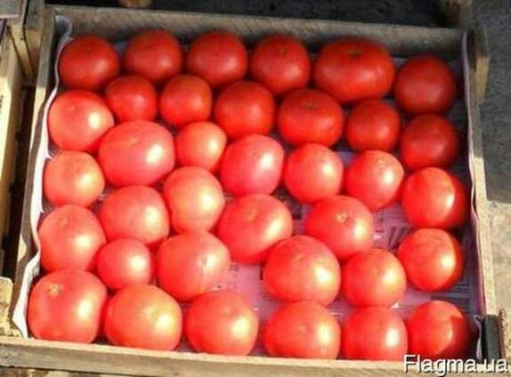 Продаем помидоры оптом, мелким оптом