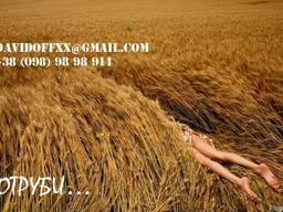 Продаем пшеничные отруби оптом с производства