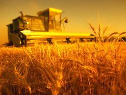 Продается Фермерское Хозяйство в Одессе