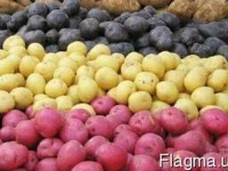 Продается посадочный картофель. Романо, Рокко, Аллдин, Ривье