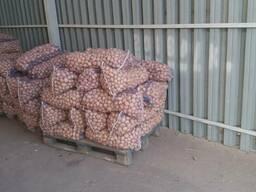Продается семенной картофель Мелоди, Санте, Бела Роса и др.