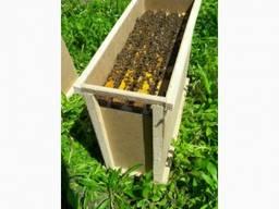 Продам бджолопакети заказ до конца месяца