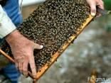 Продам часть своих пчёл - фото 3