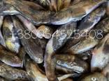 Продам Черноморский бычок ОПТ - фото 1