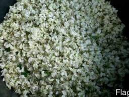 Продам цветки белой акации 2017