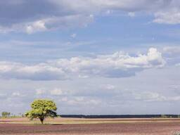 Продам действующие Агропредприятия 800га Колхоз, Полтавская - фото 1