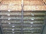 Продам действующую перепелиную ферму - фото 1