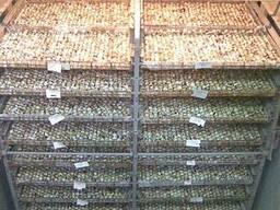 Продам действующую перепелиную ферму