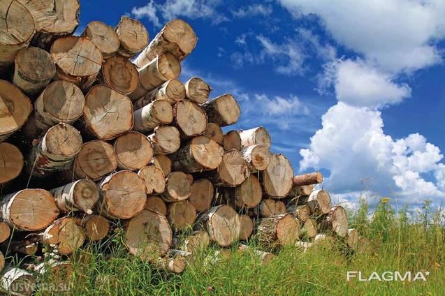 Продам дрова. Белая Церковь и район.
