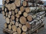Продам дрова береза, продам дрова берёза, кругляк - фото 3
