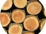 Продам дрова дубовые уложенные в чурках. - фото 1