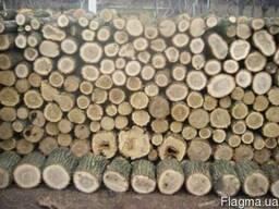 Продам дрова твердых пород Акация,Ясень