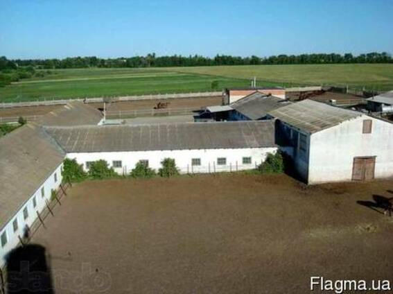 Продам ферму по трассе Харьков-Киев в 65 км от Харькова