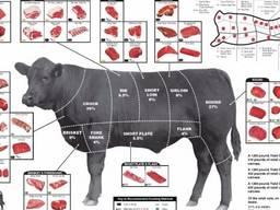 Продам говядину оптом