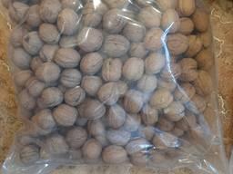 Продам грецкий орех оптом экспорт