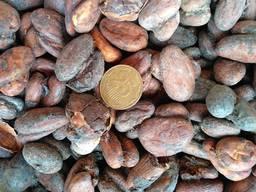 Продам какао бобы сырые