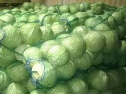Продам капусту белокочанную пекинскую от 5 тонн