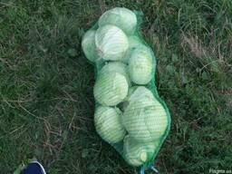 Продам капусту на переработку