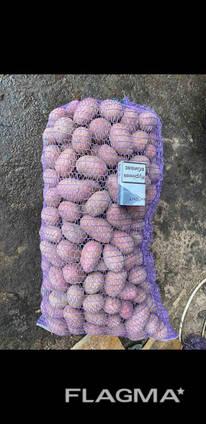 Продам картофель средний отл качества сорт лабелла опт 7.2 грн