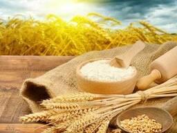 Продам: кукуруза. пшеница. ячмень. соя. масло.