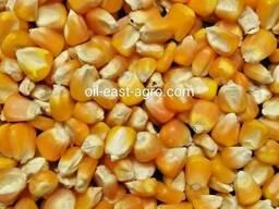 Продам кукурузу на Экспорт FOB , судовые партии 12,5-25к