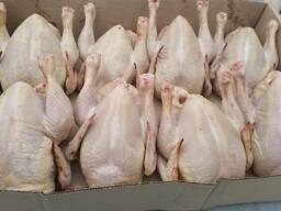 Продам курицу Ж. В. Живой вес и тушку