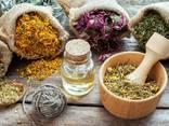Продам лекарственные травы с Волыни. Лекарственные травы . - фото 2