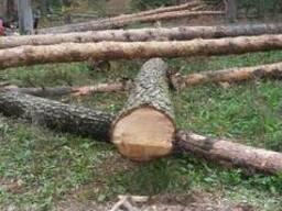 Продам лес кругляк сухостой(сосна) с документами