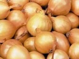 Продам лук севок (на перо) фракция от 3 до 4см 15гр/кг