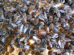 Продам магазин пчеловодства г. Киев
