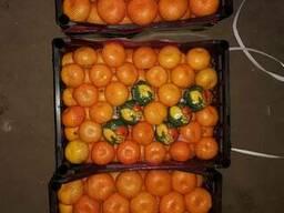 Продам мандарин и другие цитрусовые
