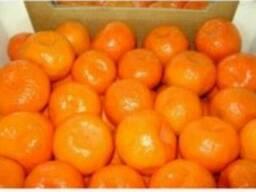 Продам мандарины Грузии, Турции оптом и мелким оптом
