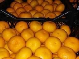 Продам мандарины и другие цитрусовые