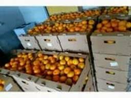 Продам мандарины сладкие свежие без косточки оптом и в розни