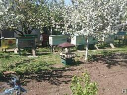 Продам мед власної пасіки