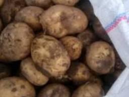 Продам молодой картофель