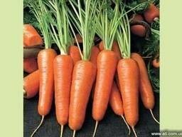 Продам морковь.