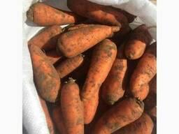 Продам морковь Абако 1 сорт (нал, безнал) доставка
