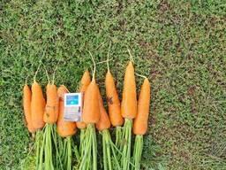 Продам морковь оптом Казахстан