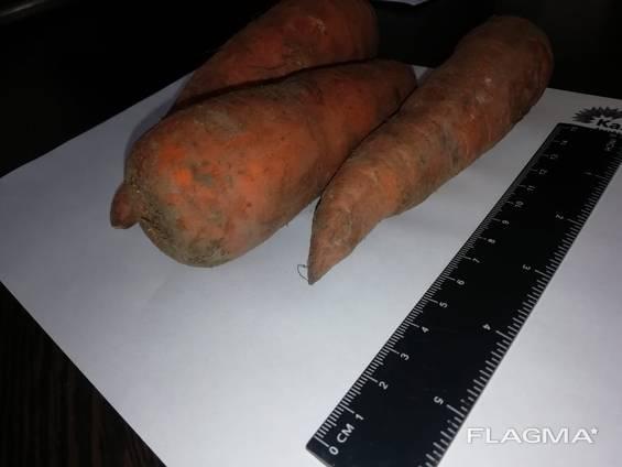Морква оптом Казахстан