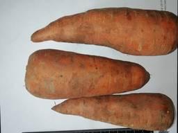 Морква оптом Казахстан - фото 2