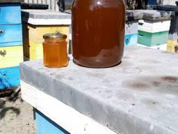 Продам мёд из кориандра