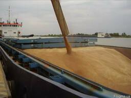 Продам на экспорт кукурузу фуражную 25000 мт FOB одесса
