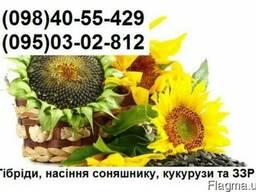 Продам насіння соняшника Бріо, Неома, Рокі, Мегасан (2017р)