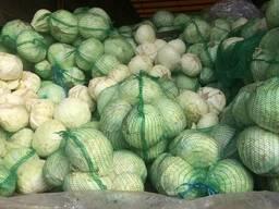 Продам оптом капусту белокачанную