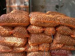 Продам орех грецкий (кругляк)
