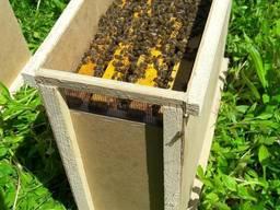 Продам пчелопакеты 2020