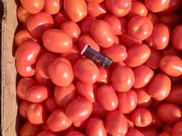 Продам помидор, сорта сливка и кругляк, обьёмами, фермер. - фото 2